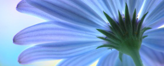 relaxing-blue-flower